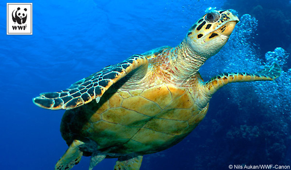General donation sea turtle ecard
