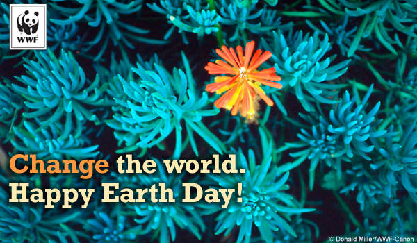 Earth Day Ecard Succulent sm