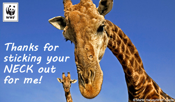 Thanks Ecard giraffe