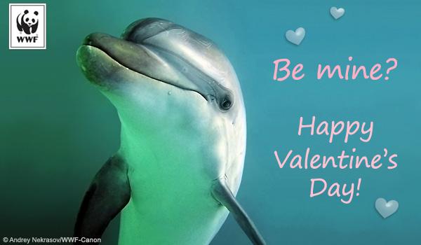 valentine wwf free ecards | world wildlife fund, Ideas