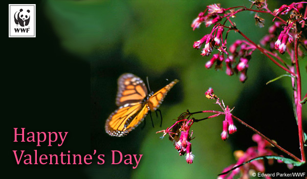 Valentine's Day donation ecard butterfly