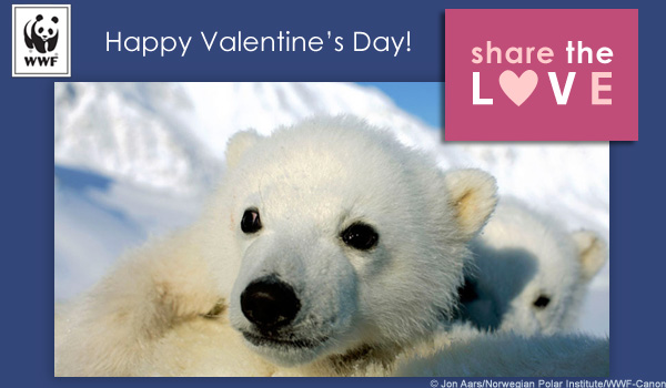 Valentine's Day Ecard polar bear