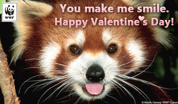 Valentine's Day ecard red panda