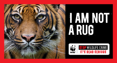 Tiger Wildlife Campaign Featured PSA