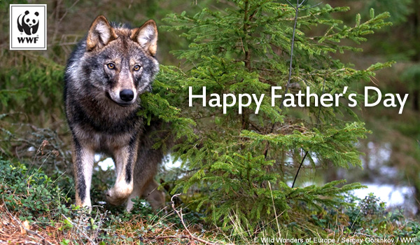 Fathers day wolf ecard