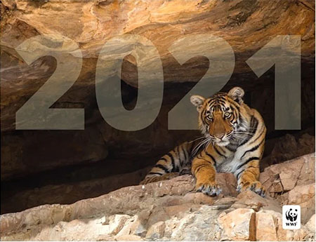 2021 calendar with tiger on cover