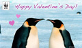 Valentine Donation Ecard Penguins