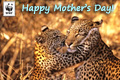 Mothers Day Donation Ecard Leopards