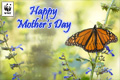 Mothers Day Donation Ecard Butterfly