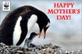 Mothers Day Donation Ecard Penguins
