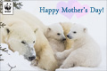 Mothers Day Donation Ecard Polar Bear