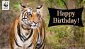 Birthday Donation Ecard Tiger