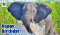 Birthday Donation Ecard Elephant