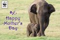 Mothers Day Donation Ecard Elephant